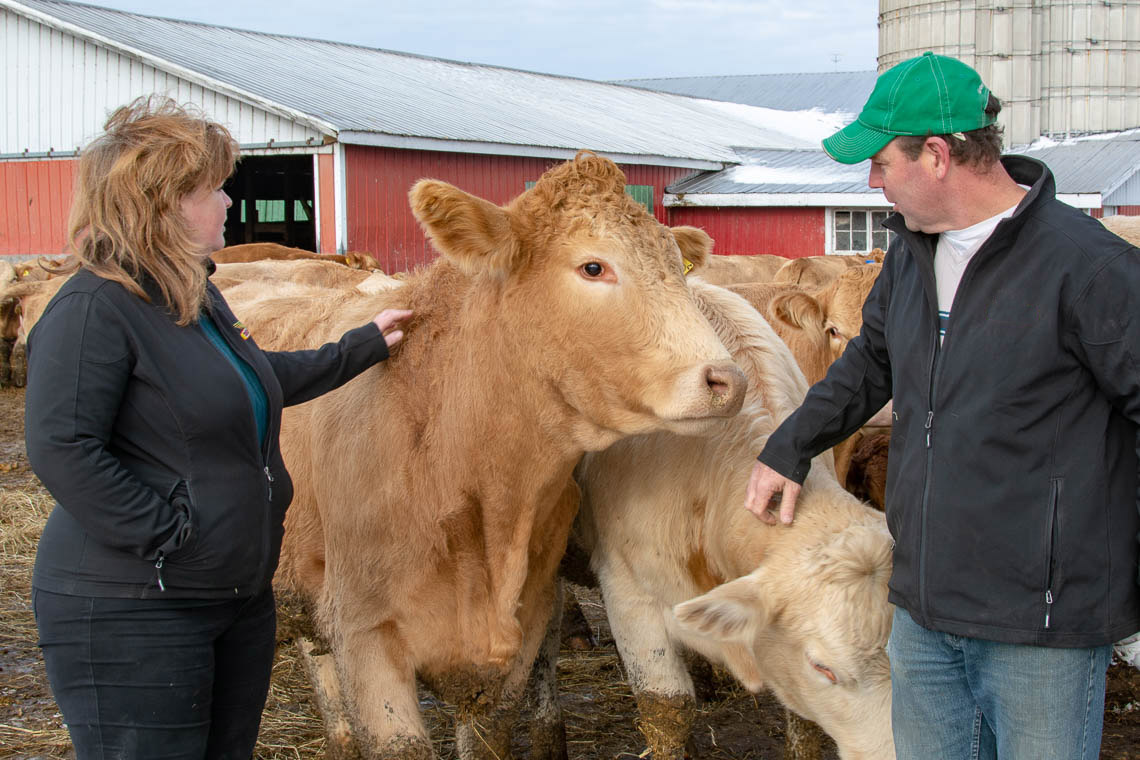 Andrew and Julie Dawson with cows